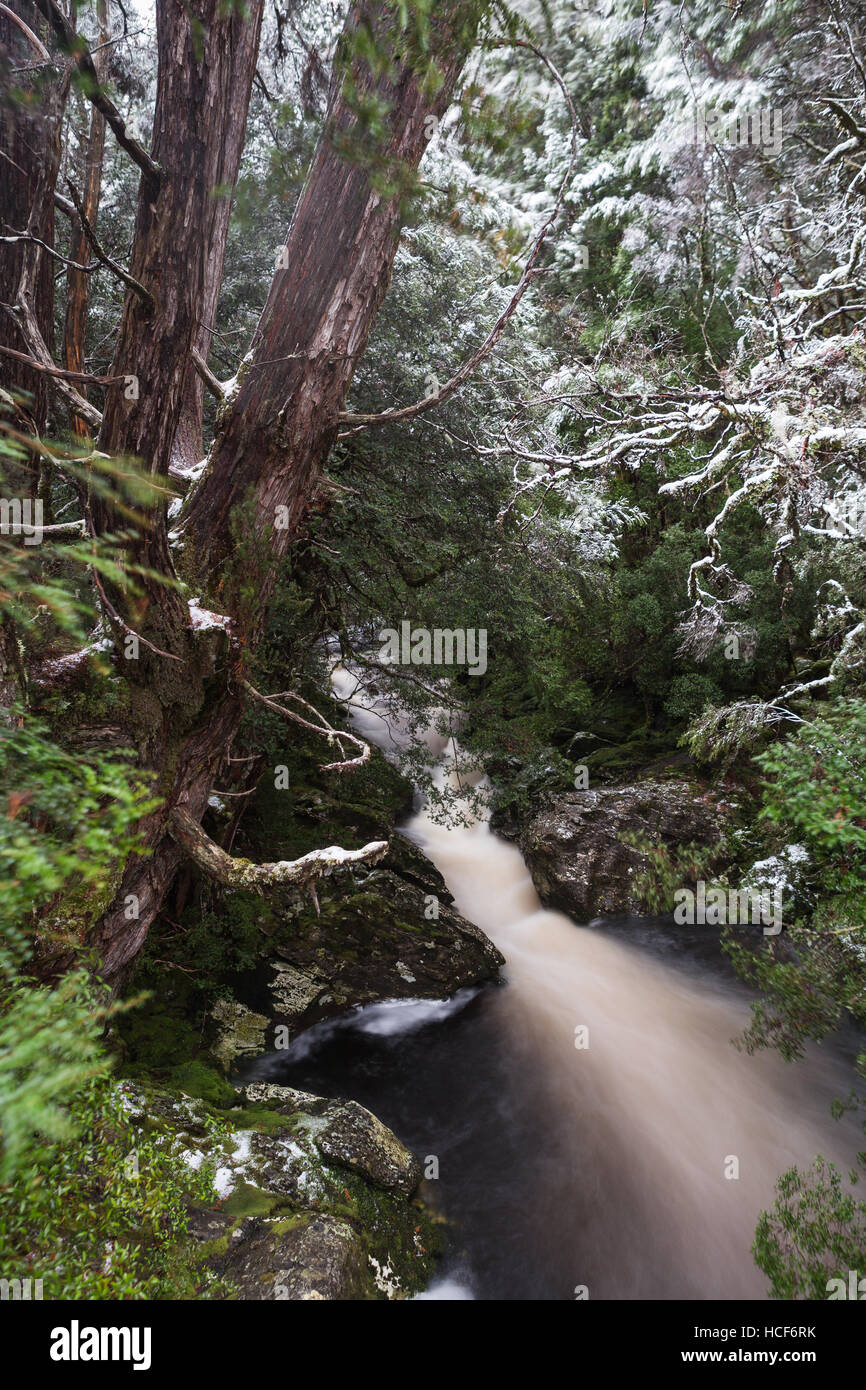 Forest stream along the Enchanted Walk in Cradle Mountain National Park, Tasmania - Stock Image