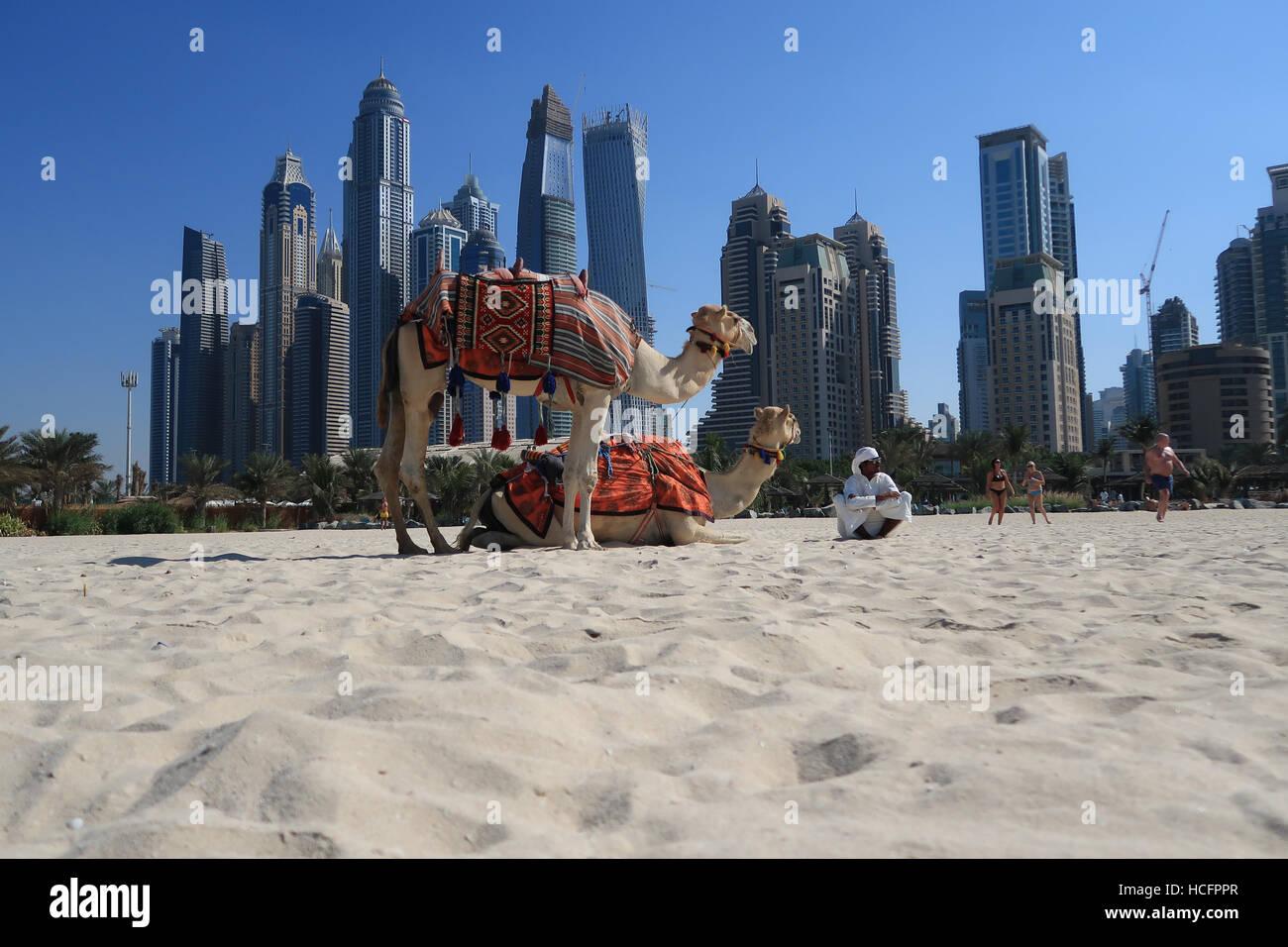 Emirati man with two camels on Jumeirah Beach Dubai Stock Photo