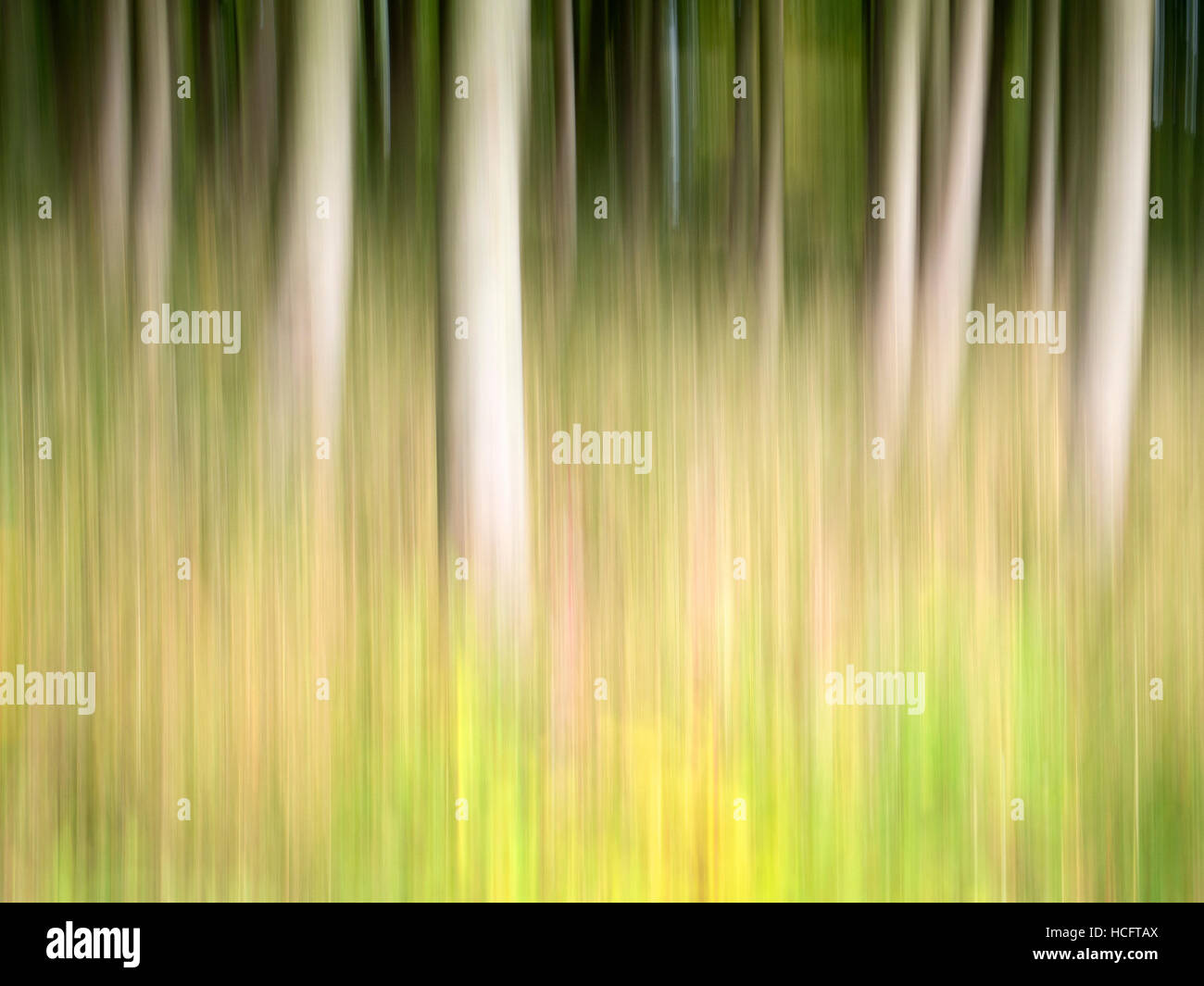 Intentional Camera Movement ICM of trees at Thruscross, North Yorkshire - Stock Image