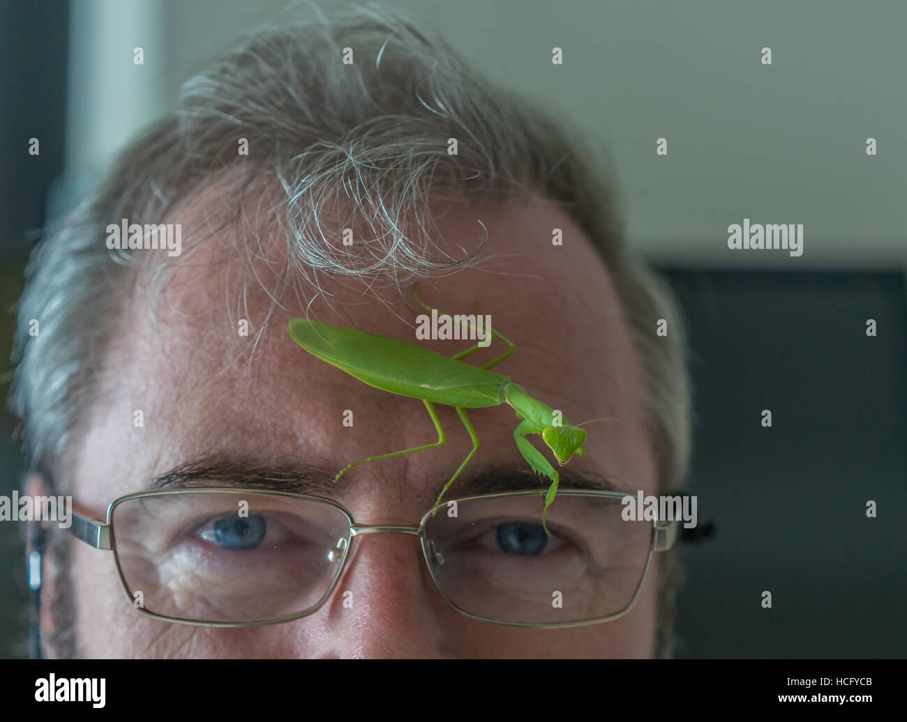 Preying Mantis on a mans face. - Stock Image