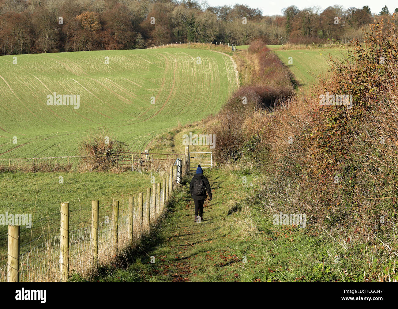Lady Rambler on a public footpath in the Chiltern Hills in England - Stock Image