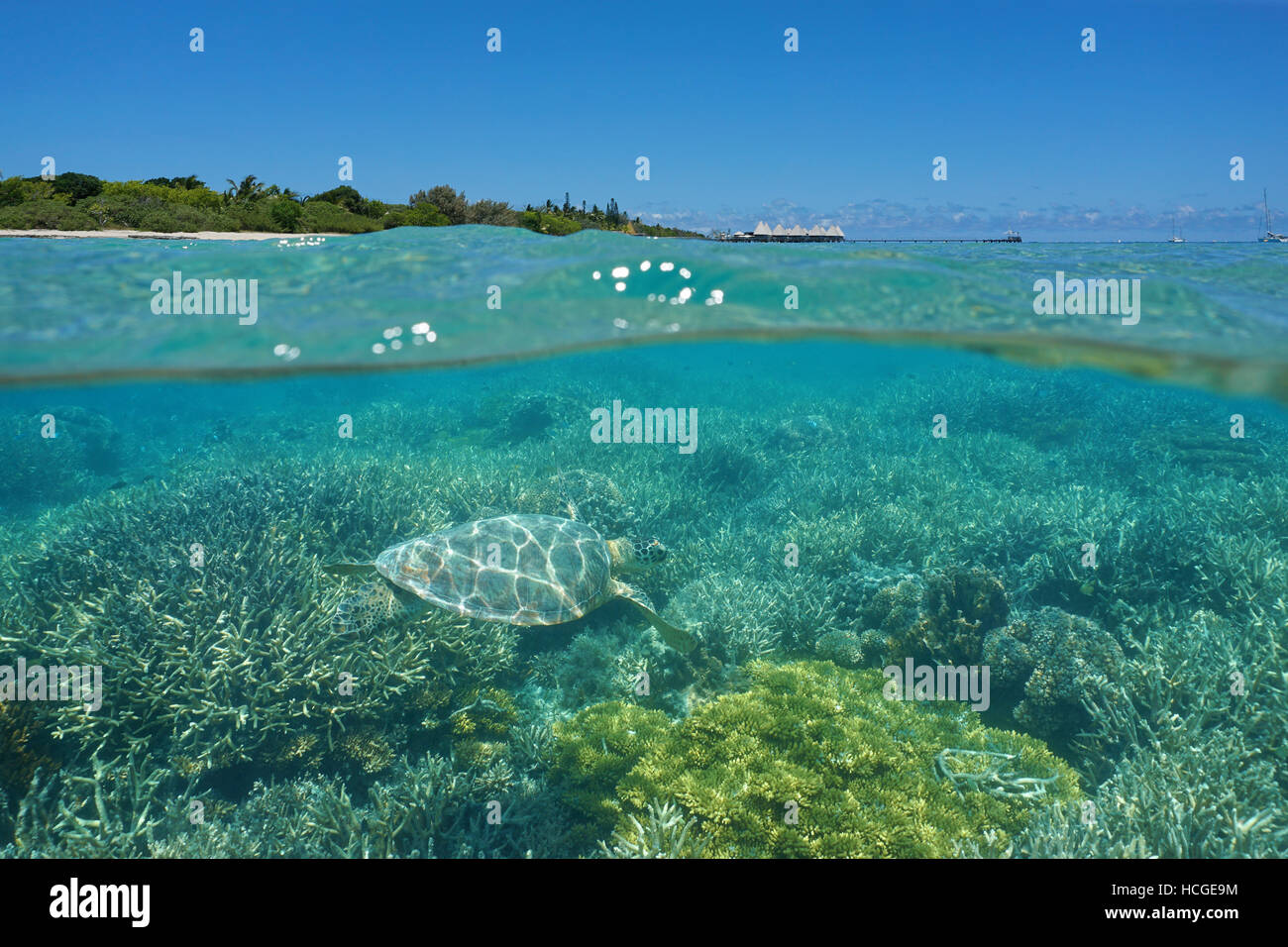 Over and under sea, a turtle underwater on a coral reef and island with  resort above surface, Noumea, New Caledonia, - Stock Image