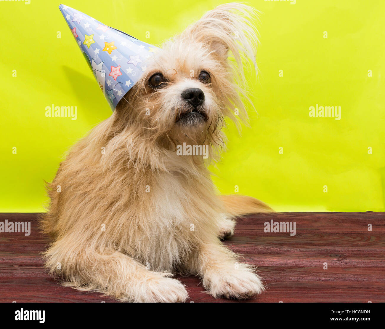 The photo shows a dog in the cap - Stock Image