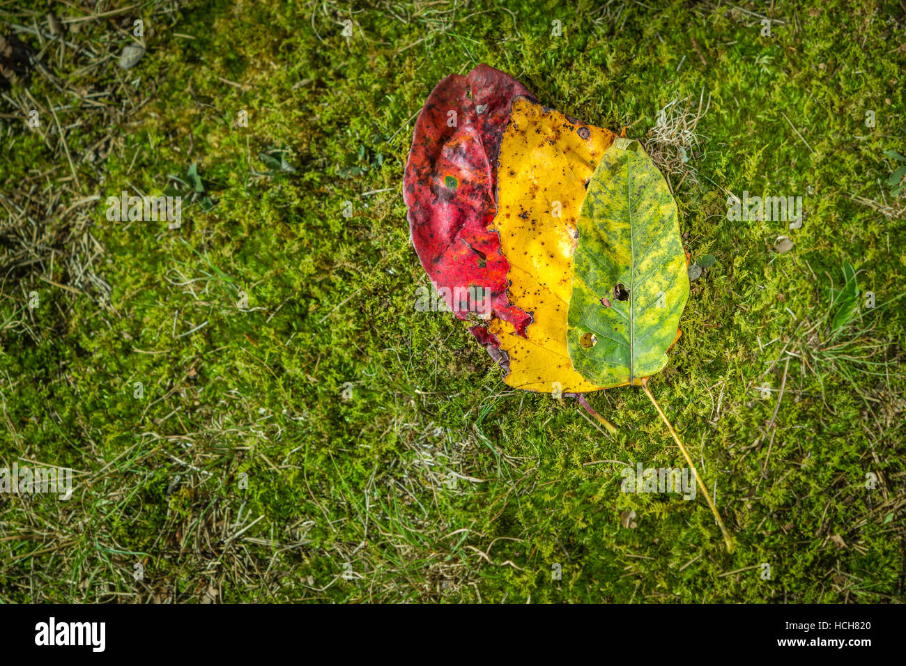 Red Colored Moss Stock Photos & Red Colored Moss Stock Images - Alamy