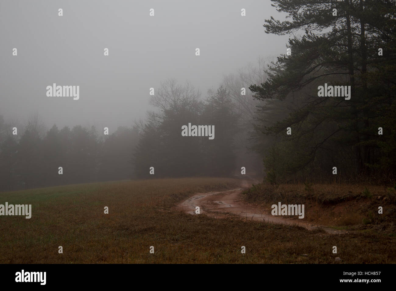 Muddy dirt road leading to the woods in mist - Stock Image