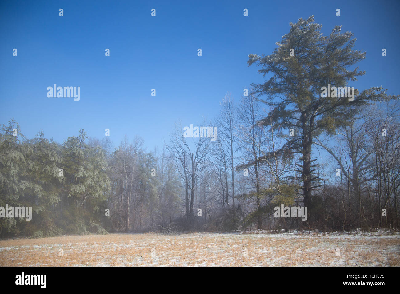 Icy field and ice covered trees with slight mist and blue skies - Stock Image