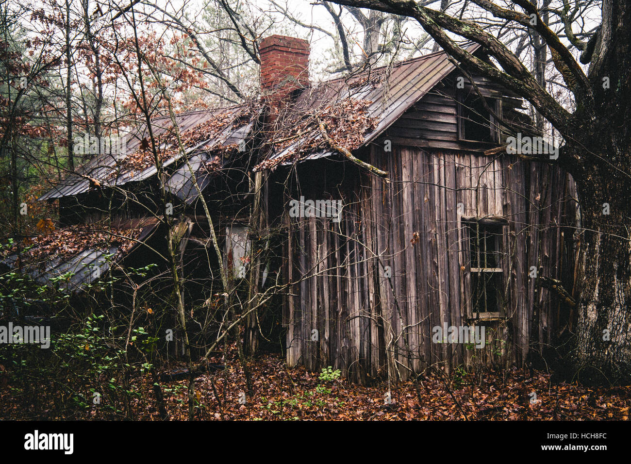 Captivating Abandoned, Overgrown House Falling Apart In The Woods