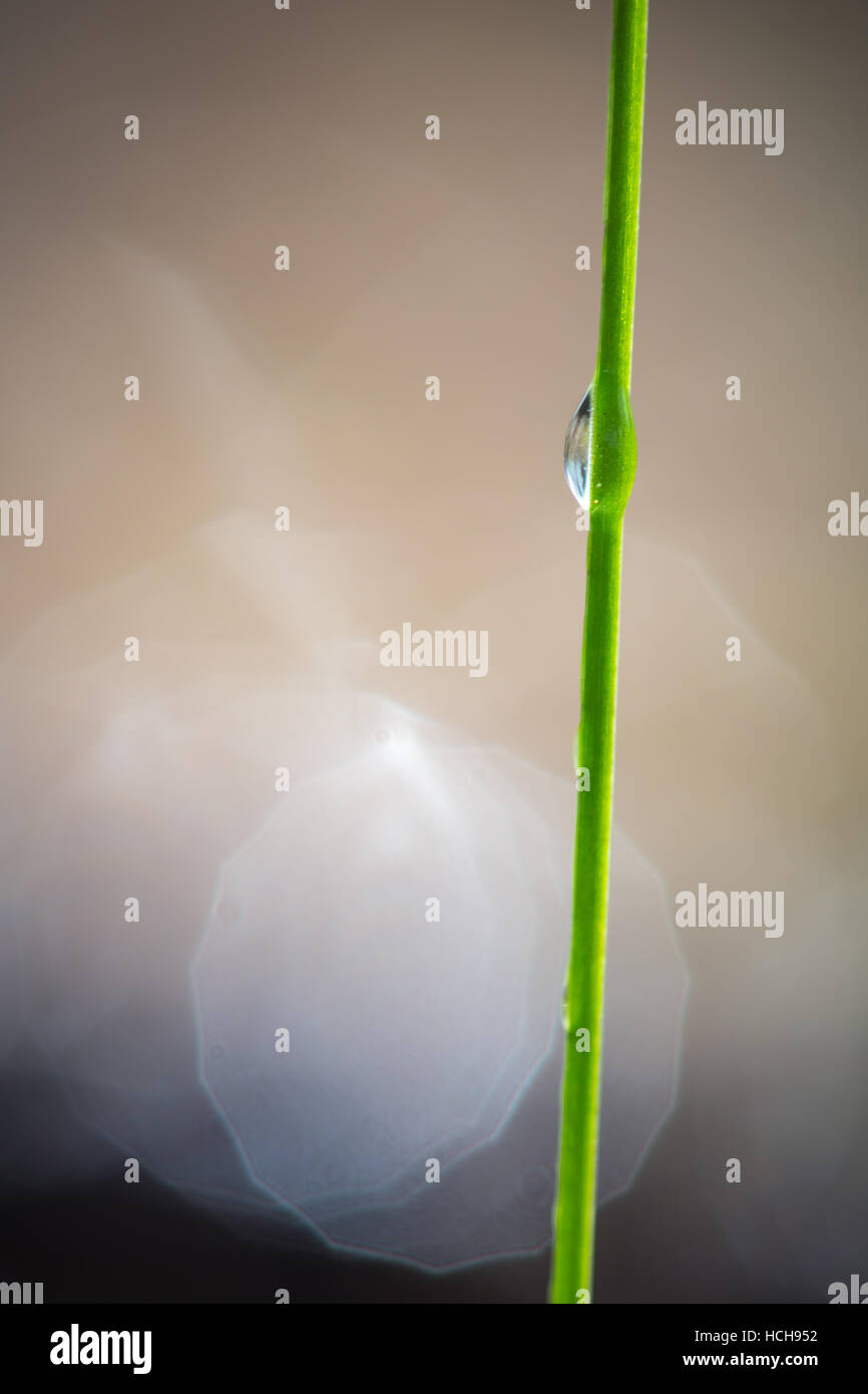 Single drop of water on the side of a single blade of grass showing refracted image of the ground with bokeh highlights - Stock Image