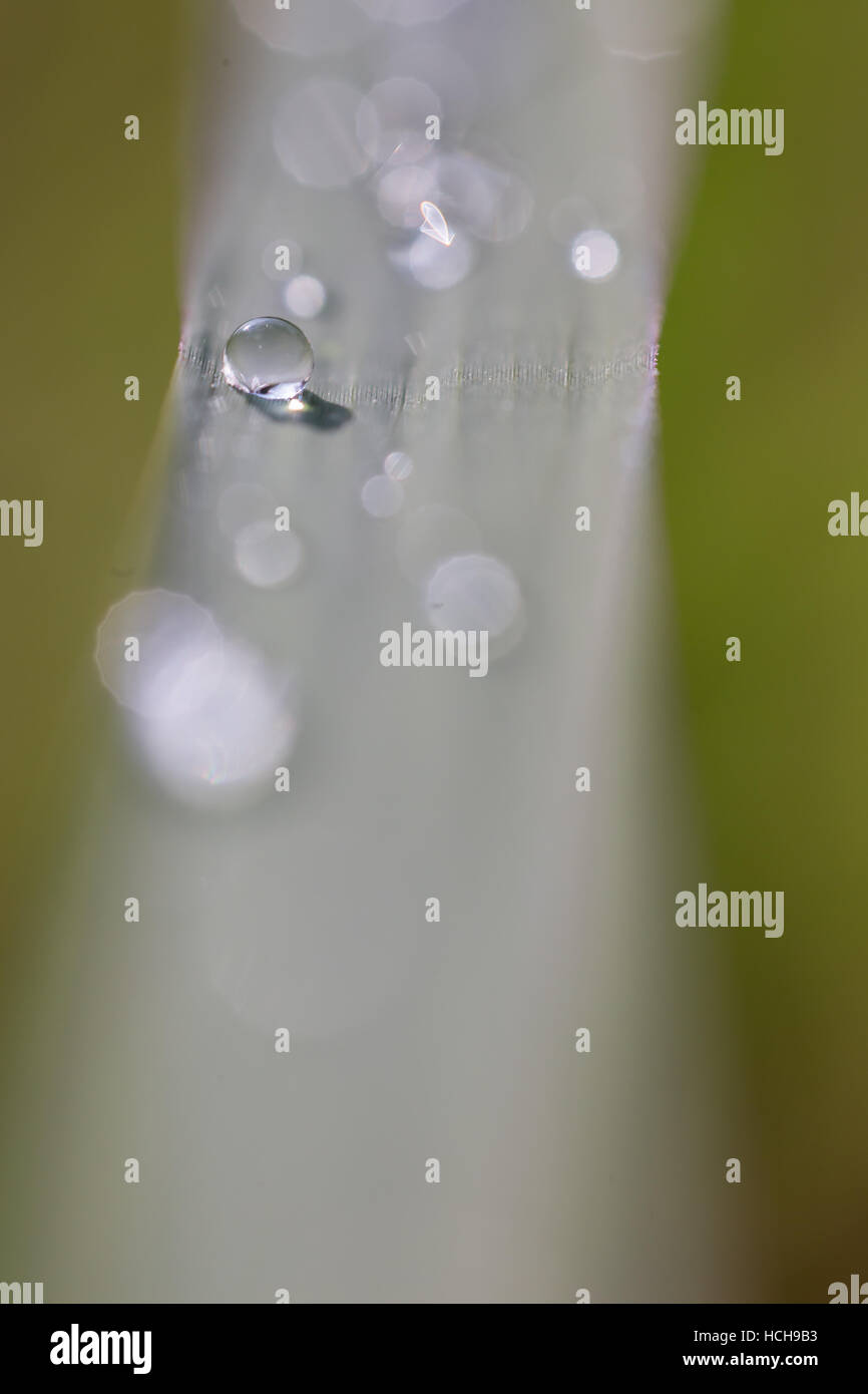 Detailed close up of a water drop on a blade of grass with other drops de-focused as bokeh highlights - Stock Image