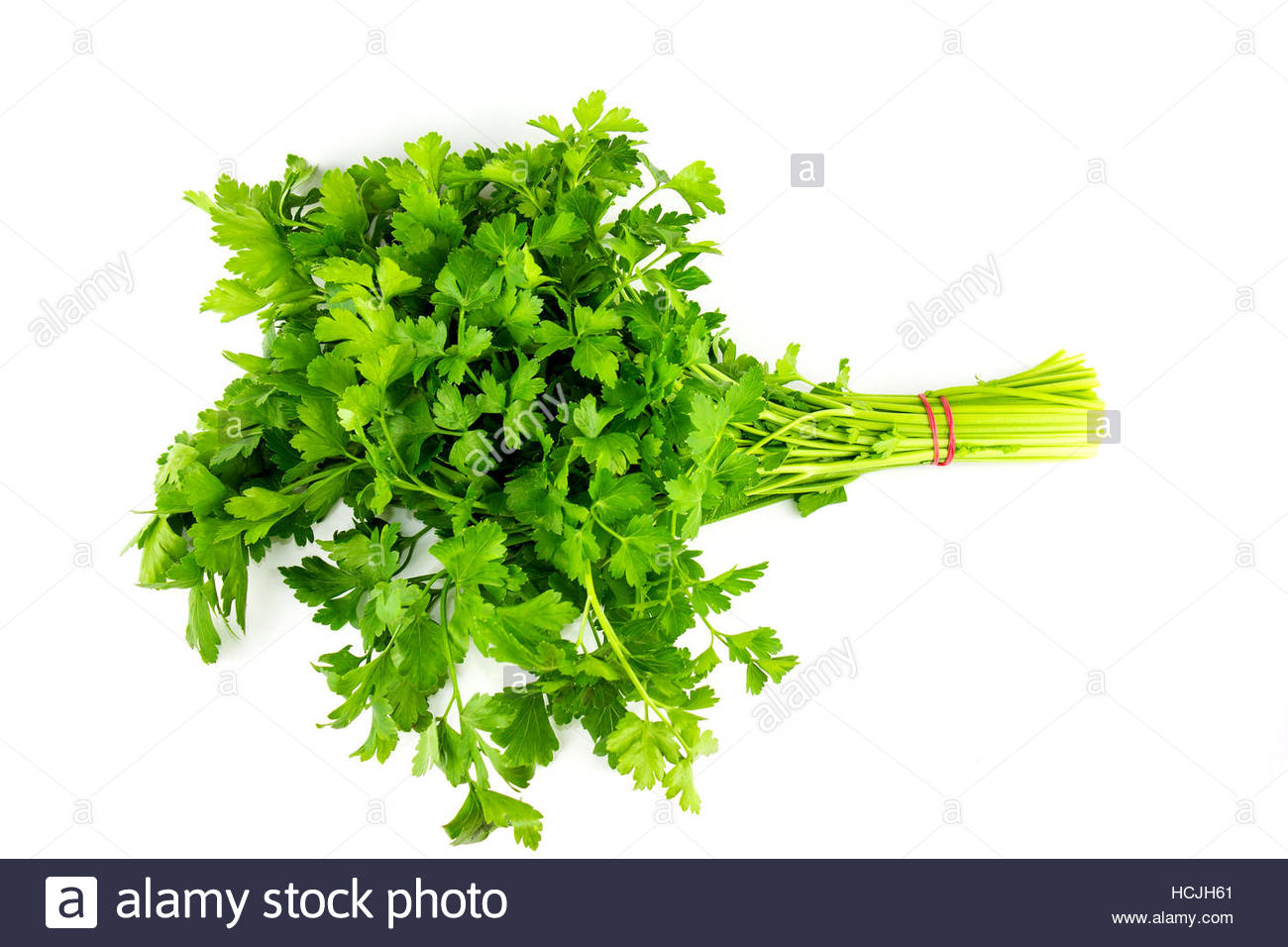Bunch of parsley, garden parsley Isolated on White, parsley cut out - Stock Image