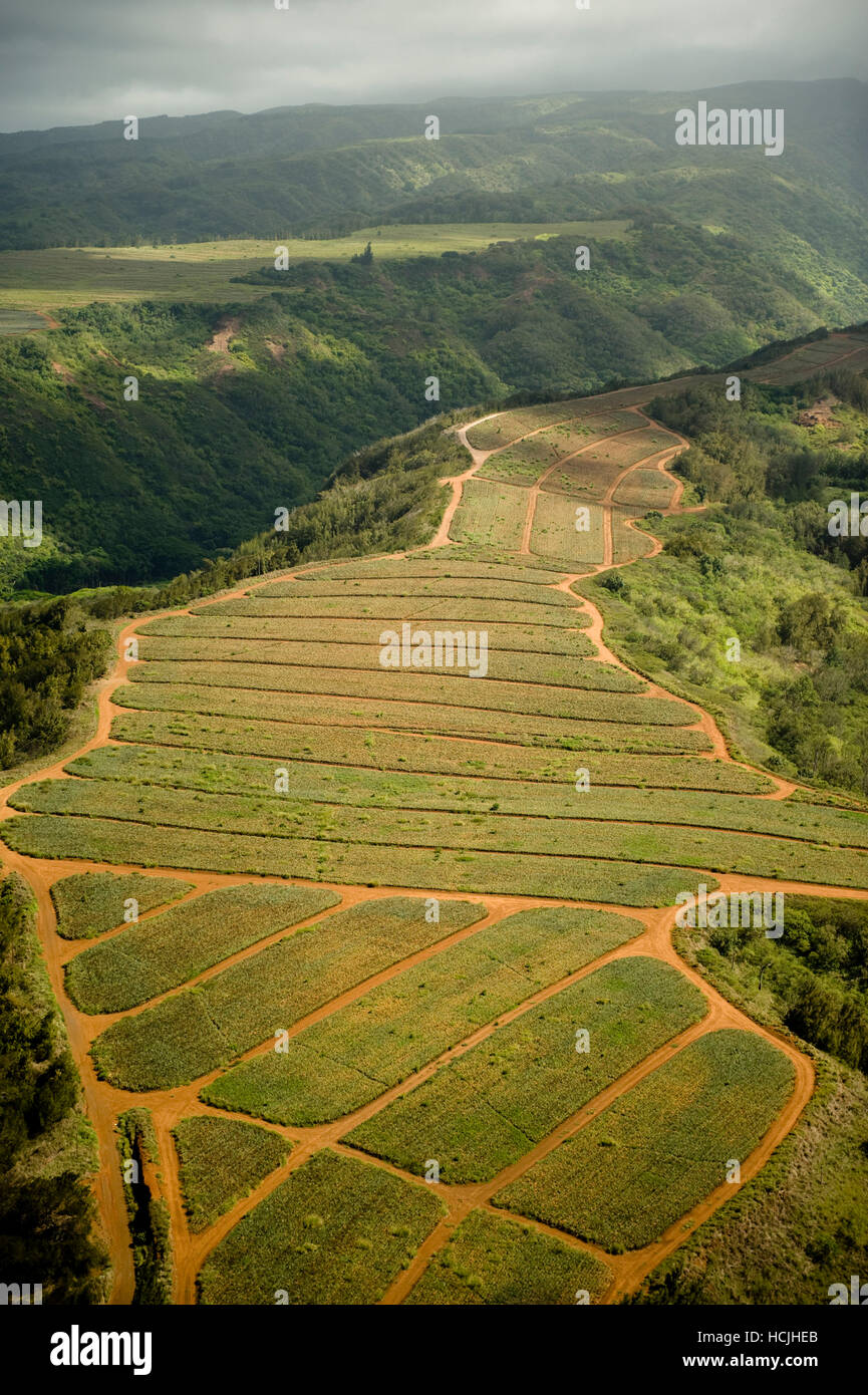 The sun shines on the hilltops of Maui, Hawaii. Farm fields and foliage over grow the mountainside rocks. - Stock Image