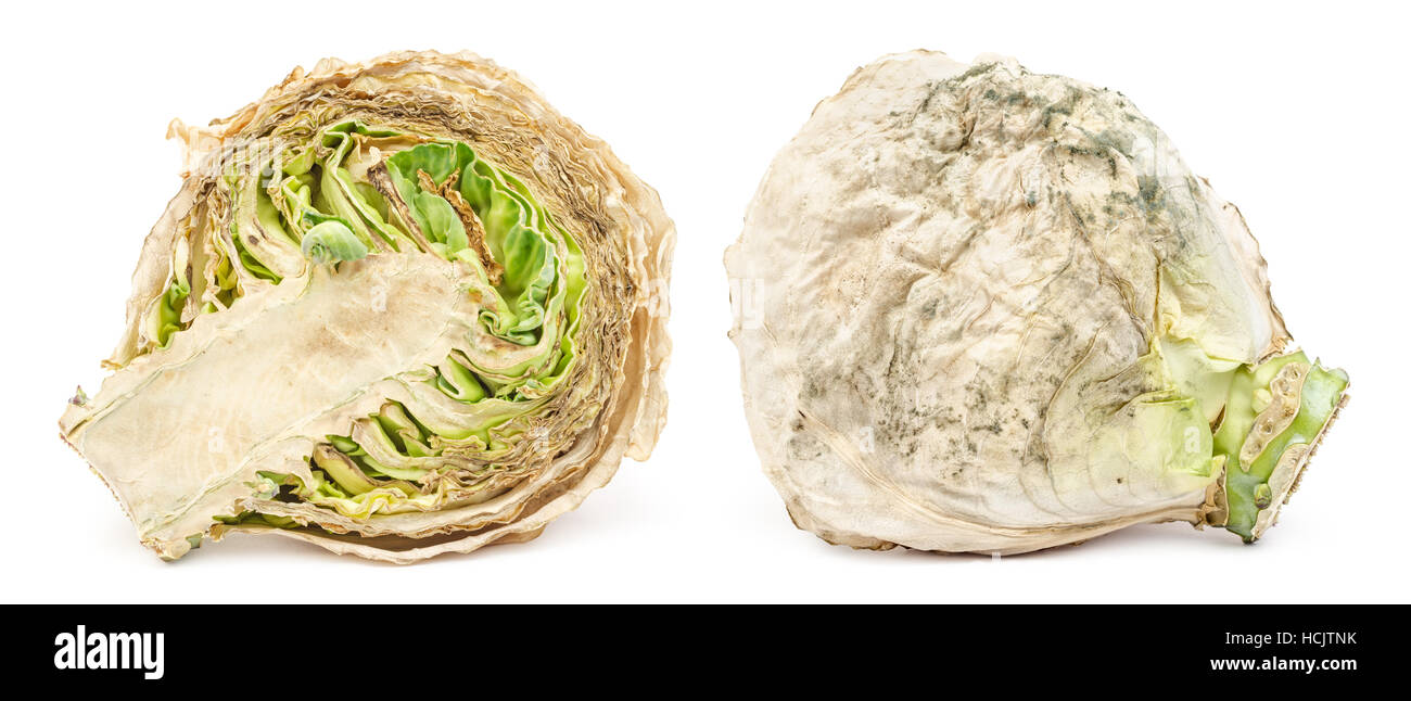 Spoiled rotten cabbage with mold isolated on white background - Stock Image