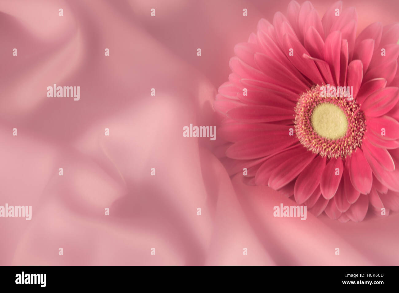 March birth flower stock photos march birth flower stock images one gerbera flower on a background from silk color fabric stock image izmirmasajfo