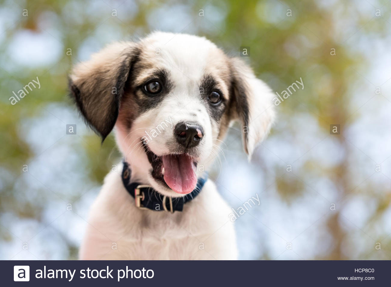Puppy on the green background - Stock Image