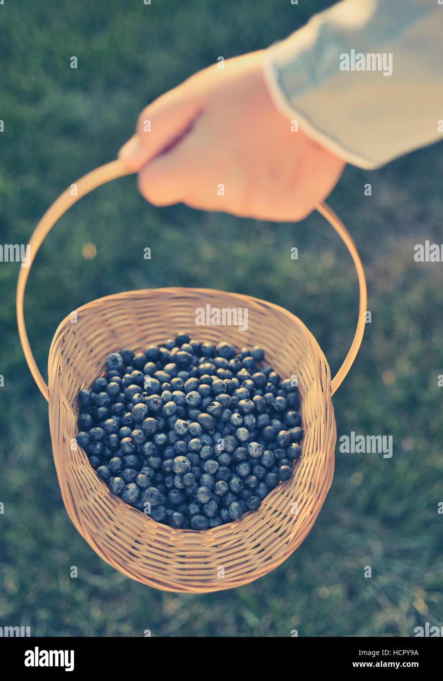 Blueberry basket - Stock Image