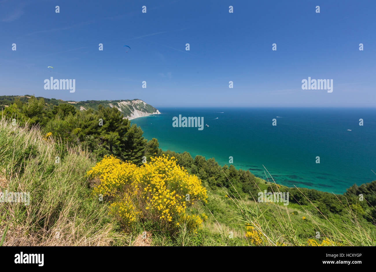 Yellow flowers on the promontory overlooking the turquoise sea, Province of Ancona, Conero Riviera, Marche, Italy - Stock Image