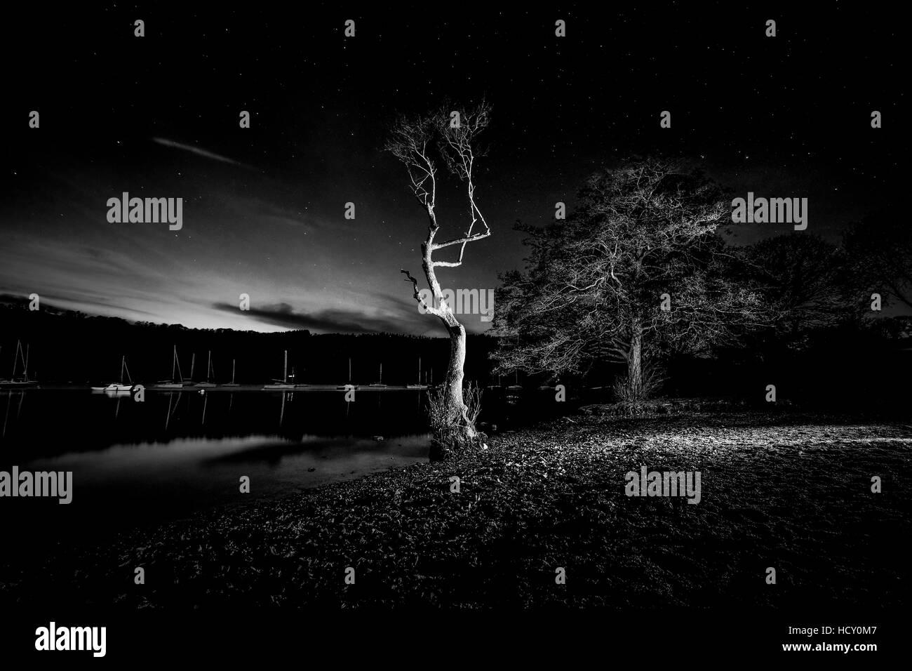 Tree at night on Lake Windermere - Stock Image
