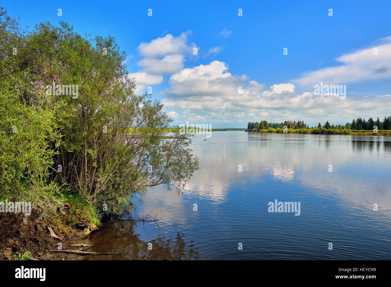 Green willow on bank of Irkut River. Eastern Siberia. Russia - Stock Image