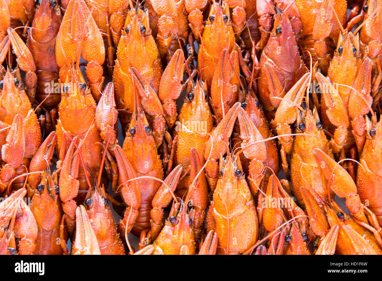 Photo of background with red boiled crawfishes - Stock Image