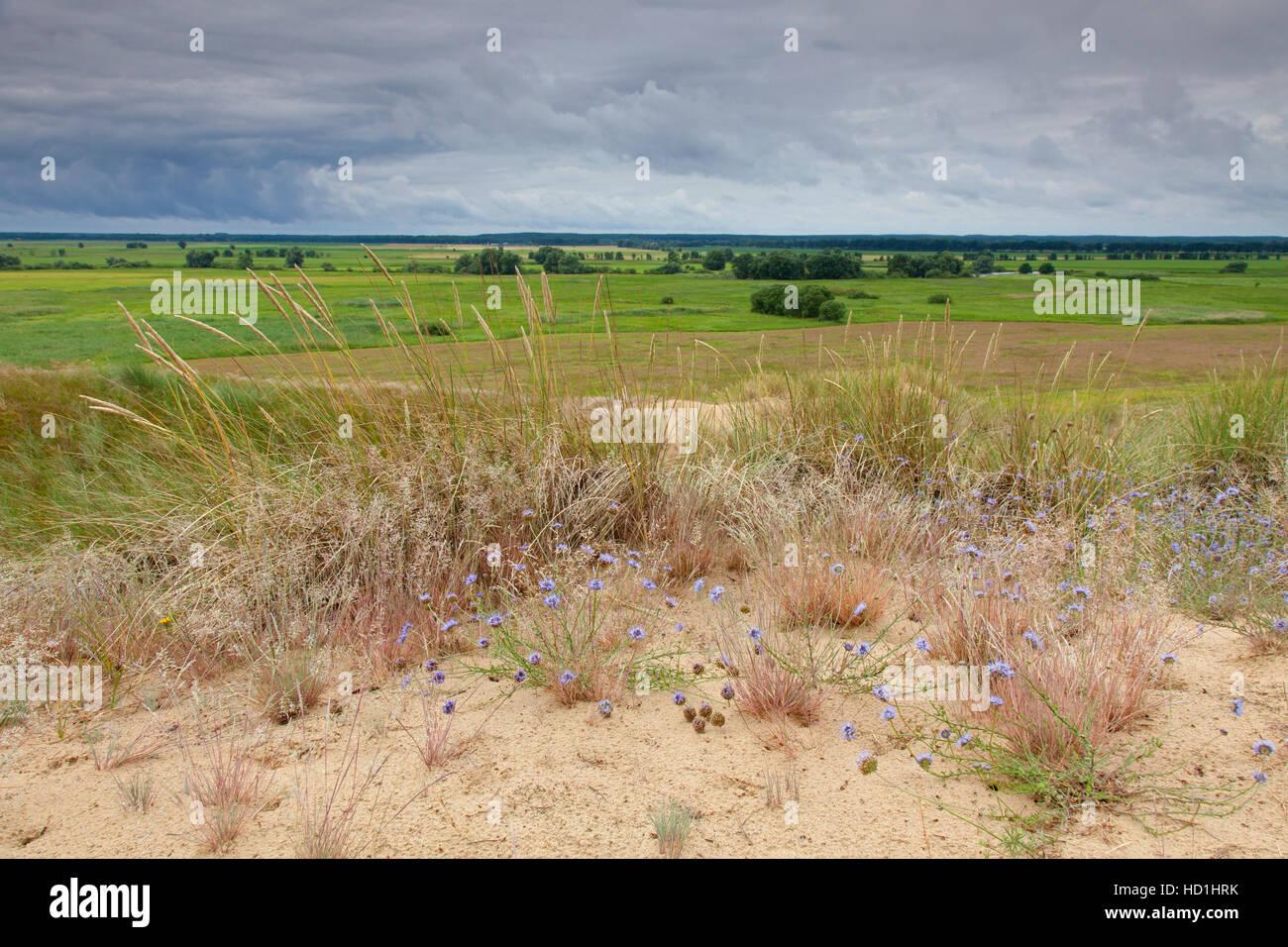 Inland Dunes by Klein Schmölen near the Elbe river, Mecklenburg Elbe Valley Nature Park / Mecklenburgisches - Stock Image