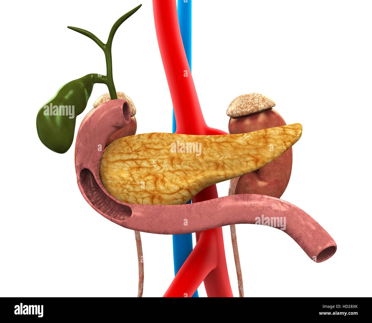 Gallbladder Disease Stock Photos & Gallbladder Disease Stock Images ...