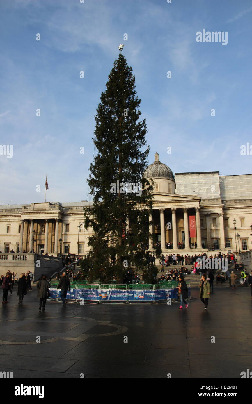 2016 Christams Tree in Trafalgar Square, London, donated by the city of Oslo, Norway - Stock Image