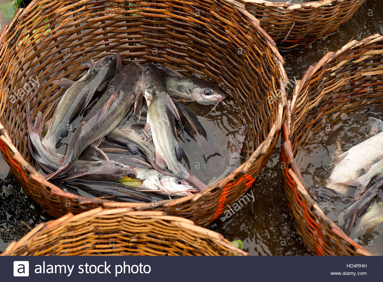 Fish for sale at Epe Fish Market in Lagos, Nigeria - Stock Image