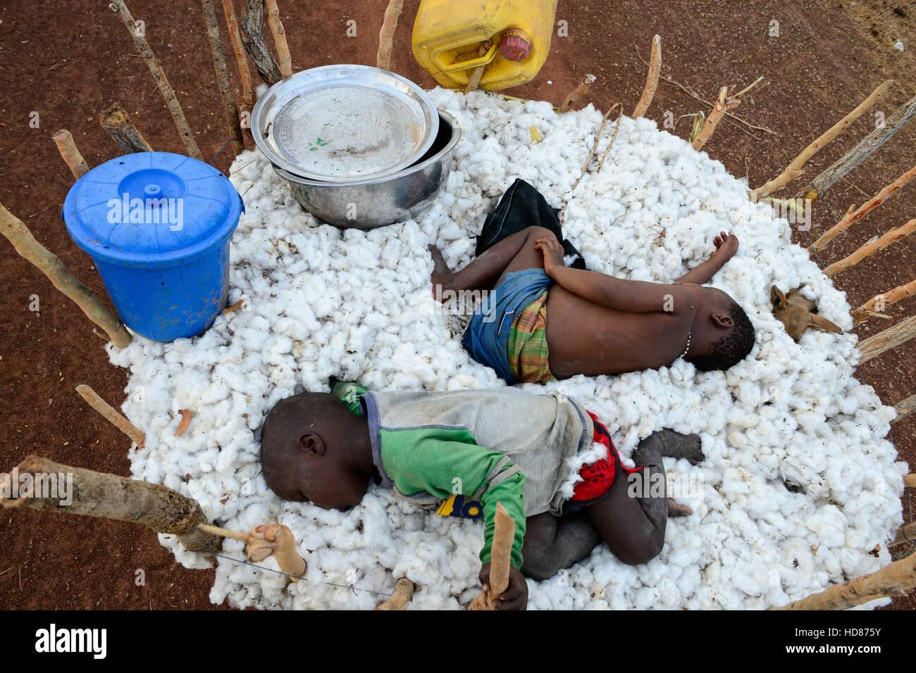 BURKINA FASO, village Soumousso, cotton harvest, children transport harvested cotton with donkey cart to their village, - Stock Image
