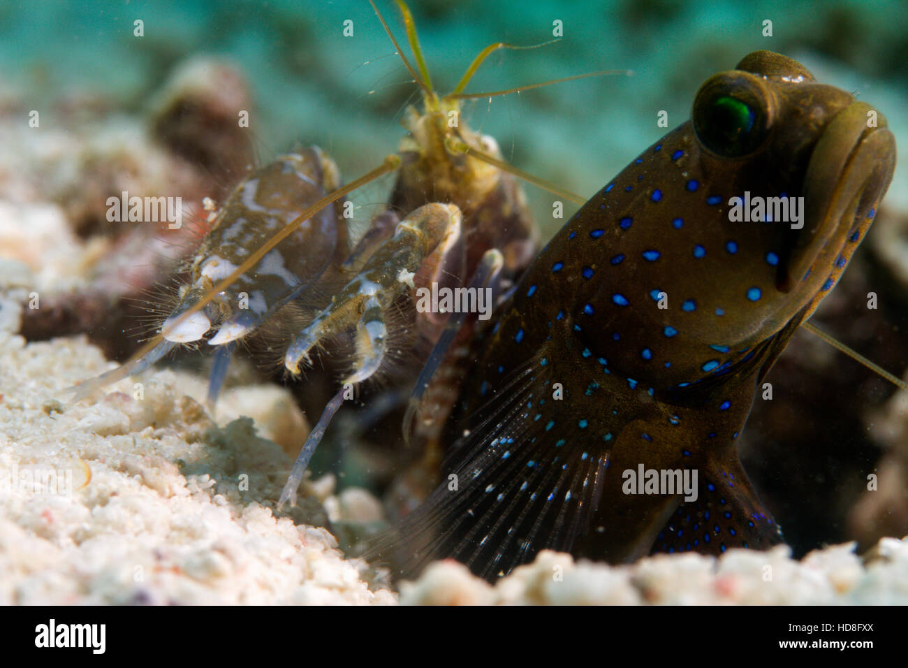 UNderwater macro photography. - Stock Image