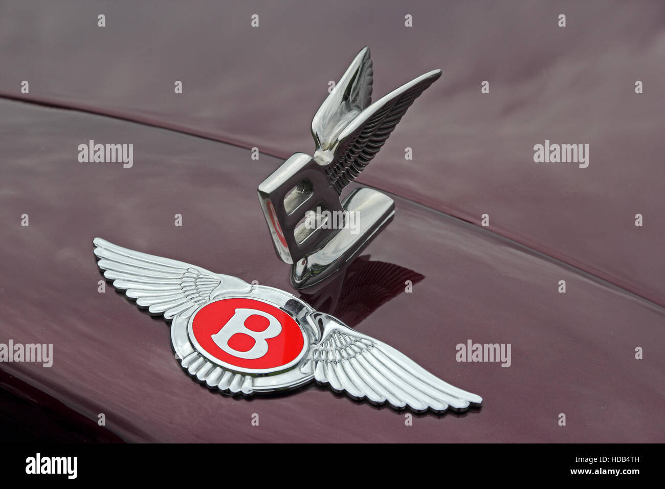 Red Bentley badge and Flying B mascot on front of maroon car Stock Photo
