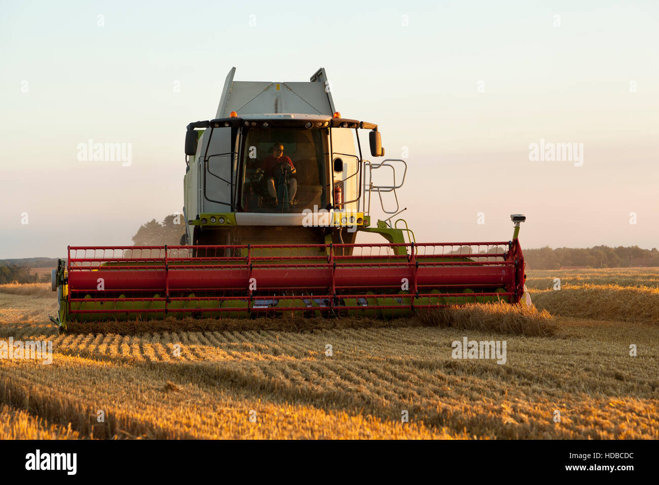 A combined harvester cutting corn - Stock Image