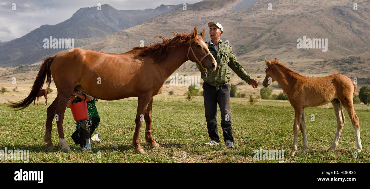 Kazakh man holding foal away from nursing mare being milked by wife in Aksu Zhabagly Kazakhstan - Stock Image
