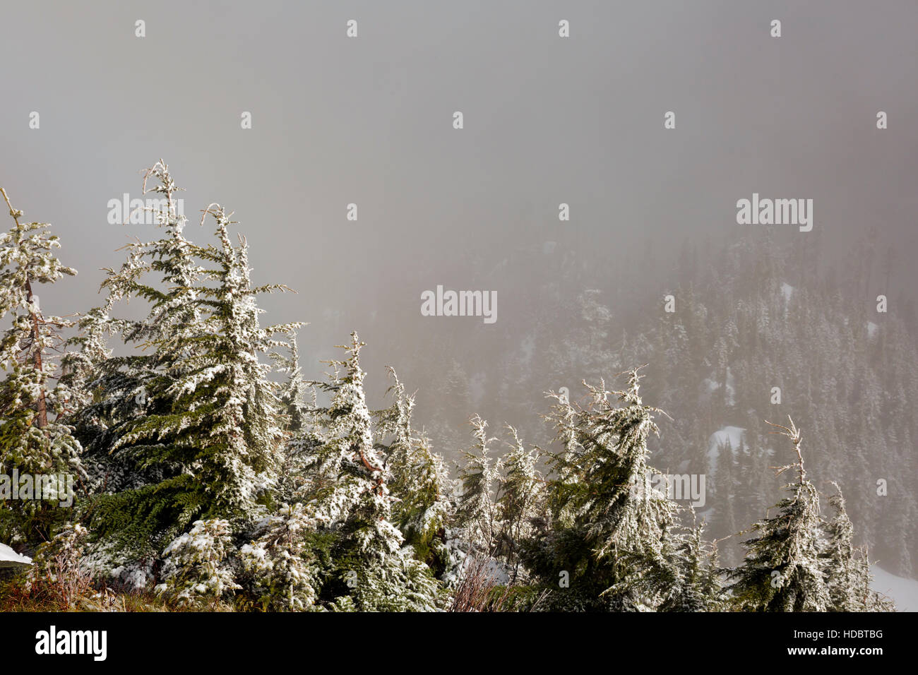 WA12958-00...WASHINGTON - A sunny interlude during a snow storm on the summit of Mailbox Peak in the Cascade Mountains - Stock Image