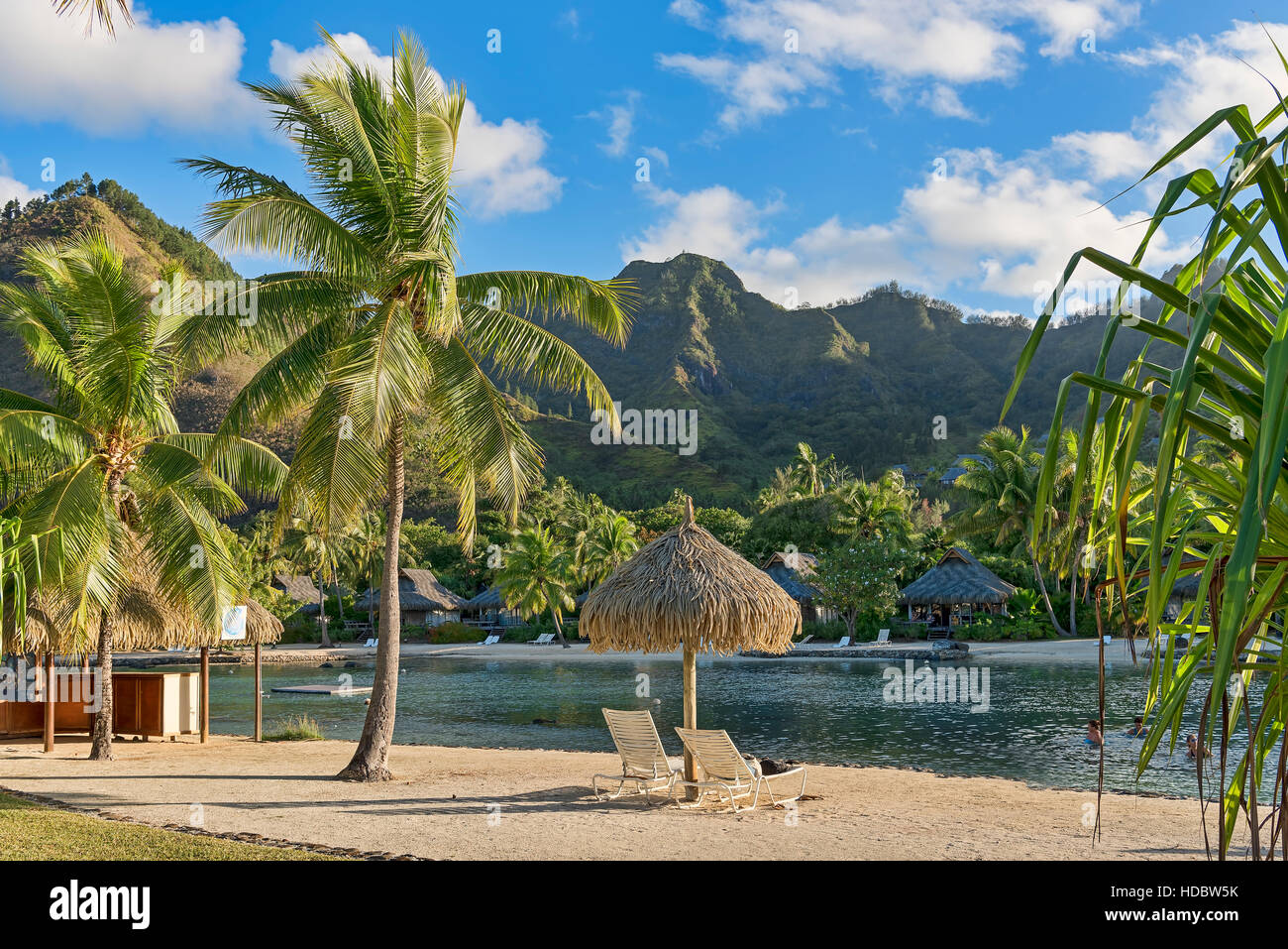 Chairs on beach with palm trees, Mo'orea, South Pacific, French Polynesia - Stock Image