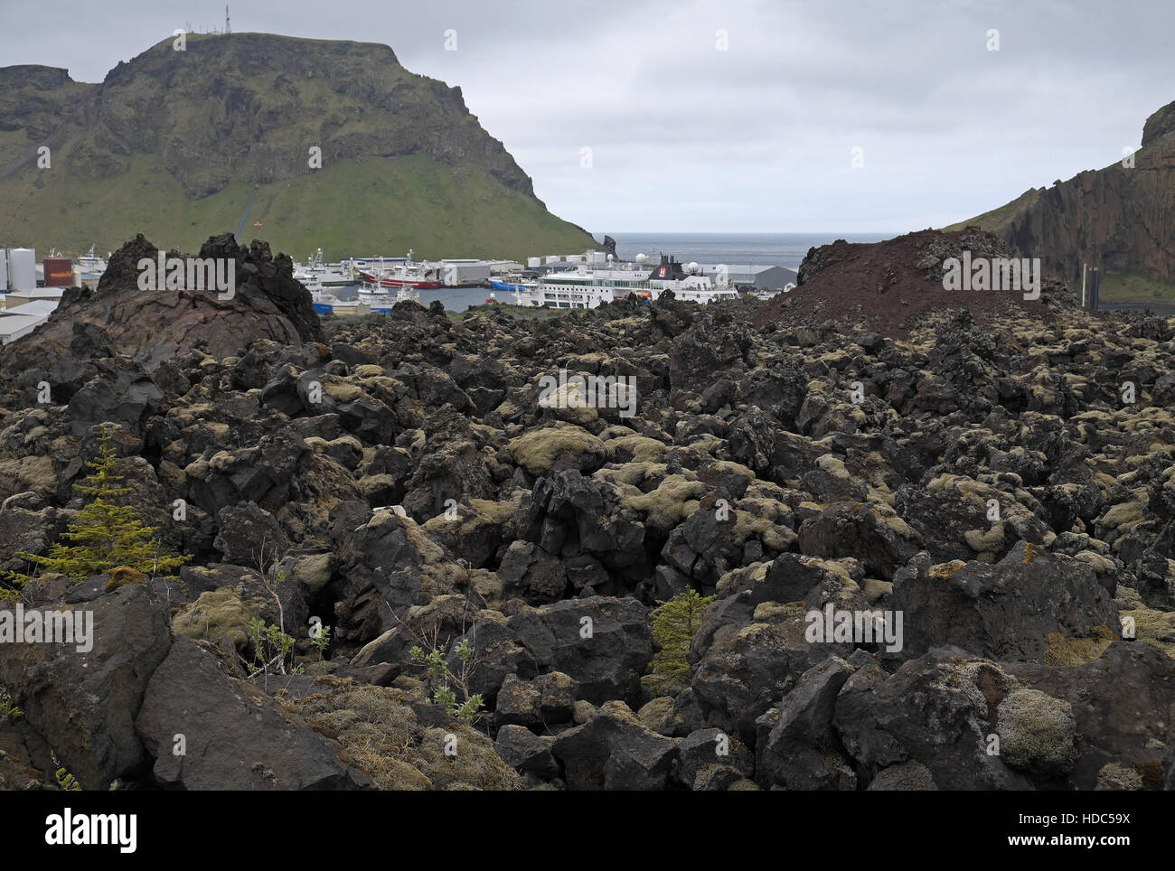 The harbour and town of Heimaey, seen over the lava field formed by the eruption of Eldfell in 1973, Heimaey, Iceland. - Stock Image
