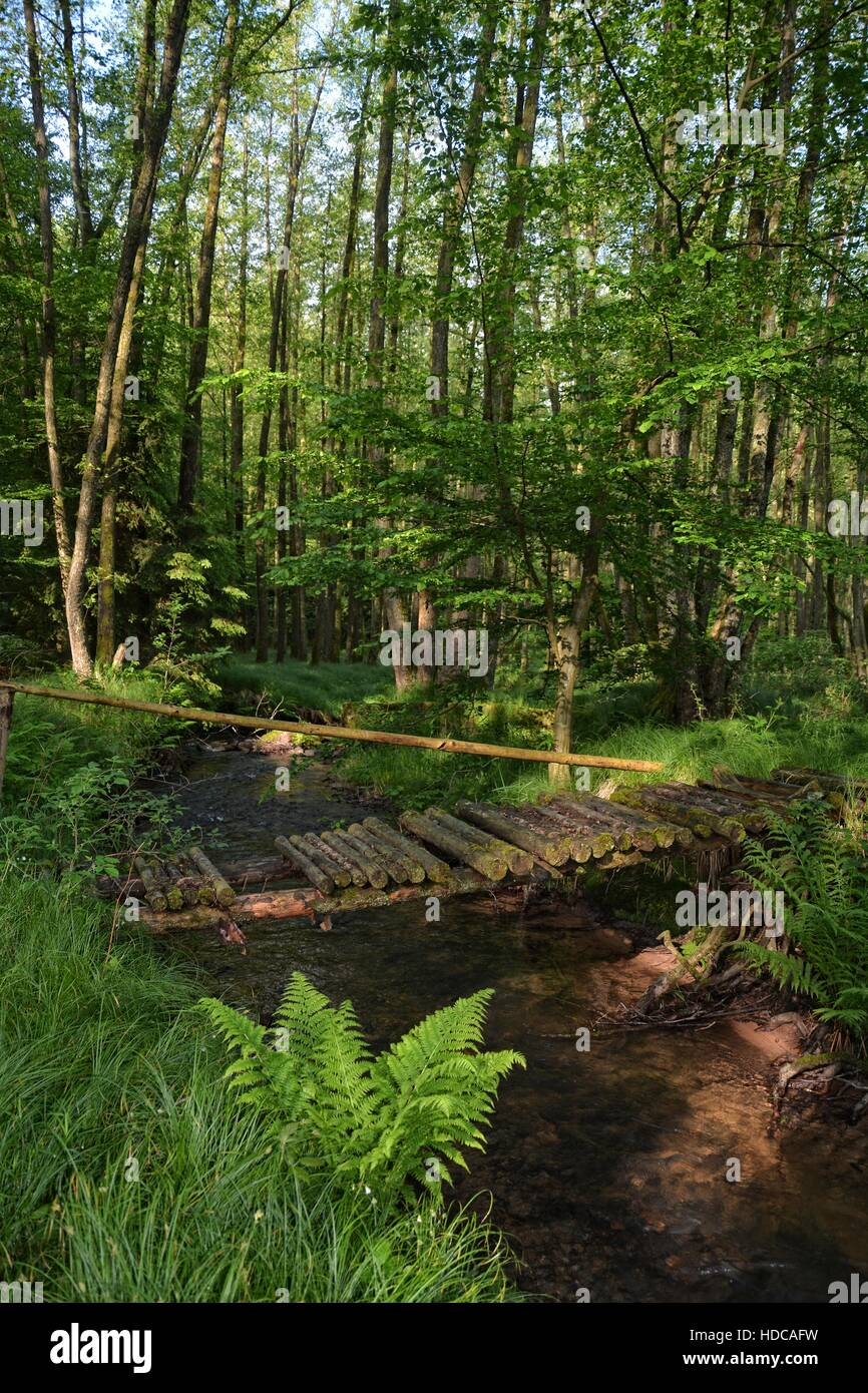 old rotten bridge on stream in the woods - Stock Image