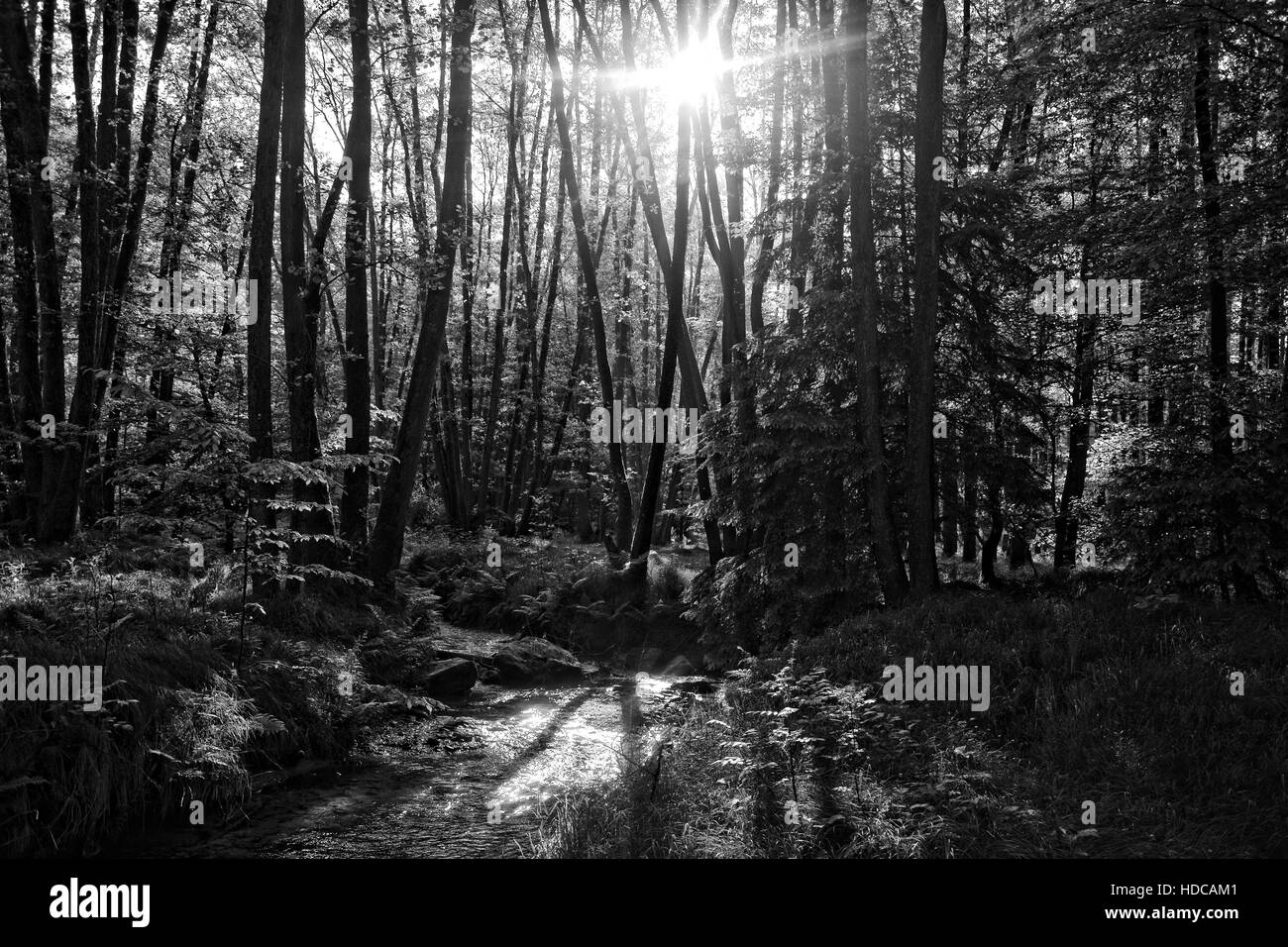 Small brook in the forest in the early morning with sun, in black and white - Stock Image