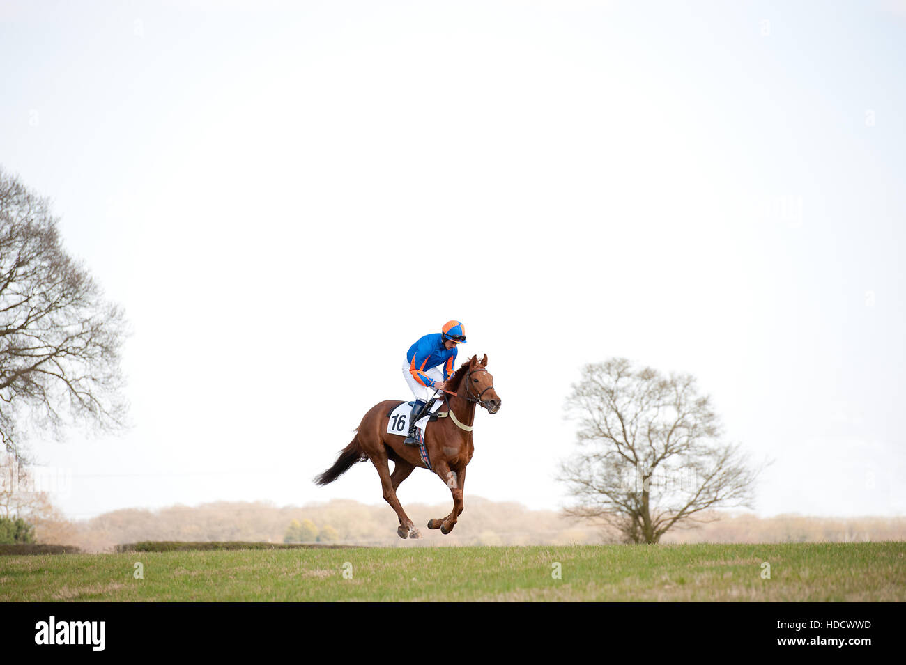 horse in the air - Stock Image