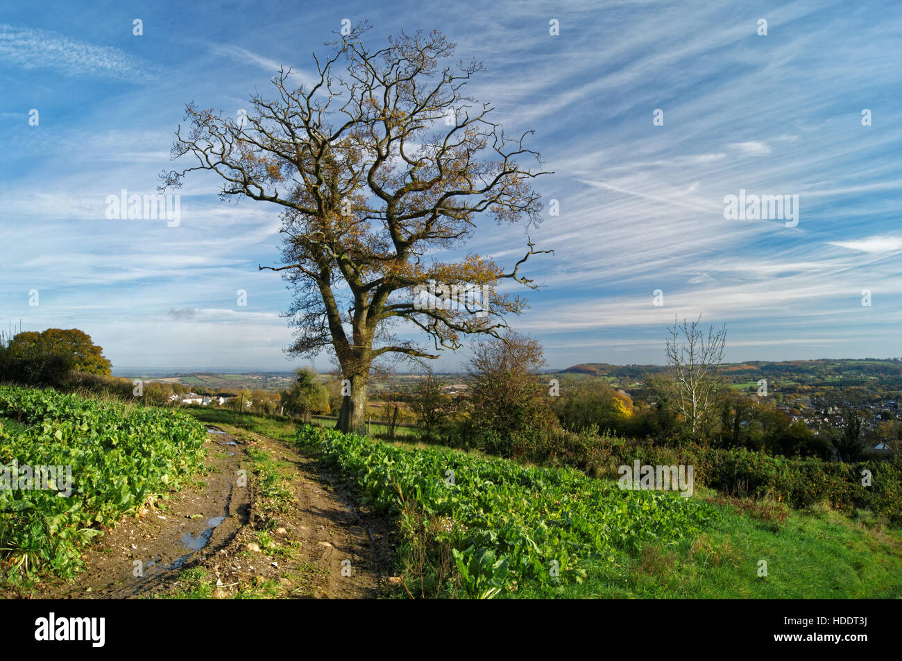 UK,Somerset,Chard,Countryside above Crimchard Looking Towards Sprays Hill - Stock Image