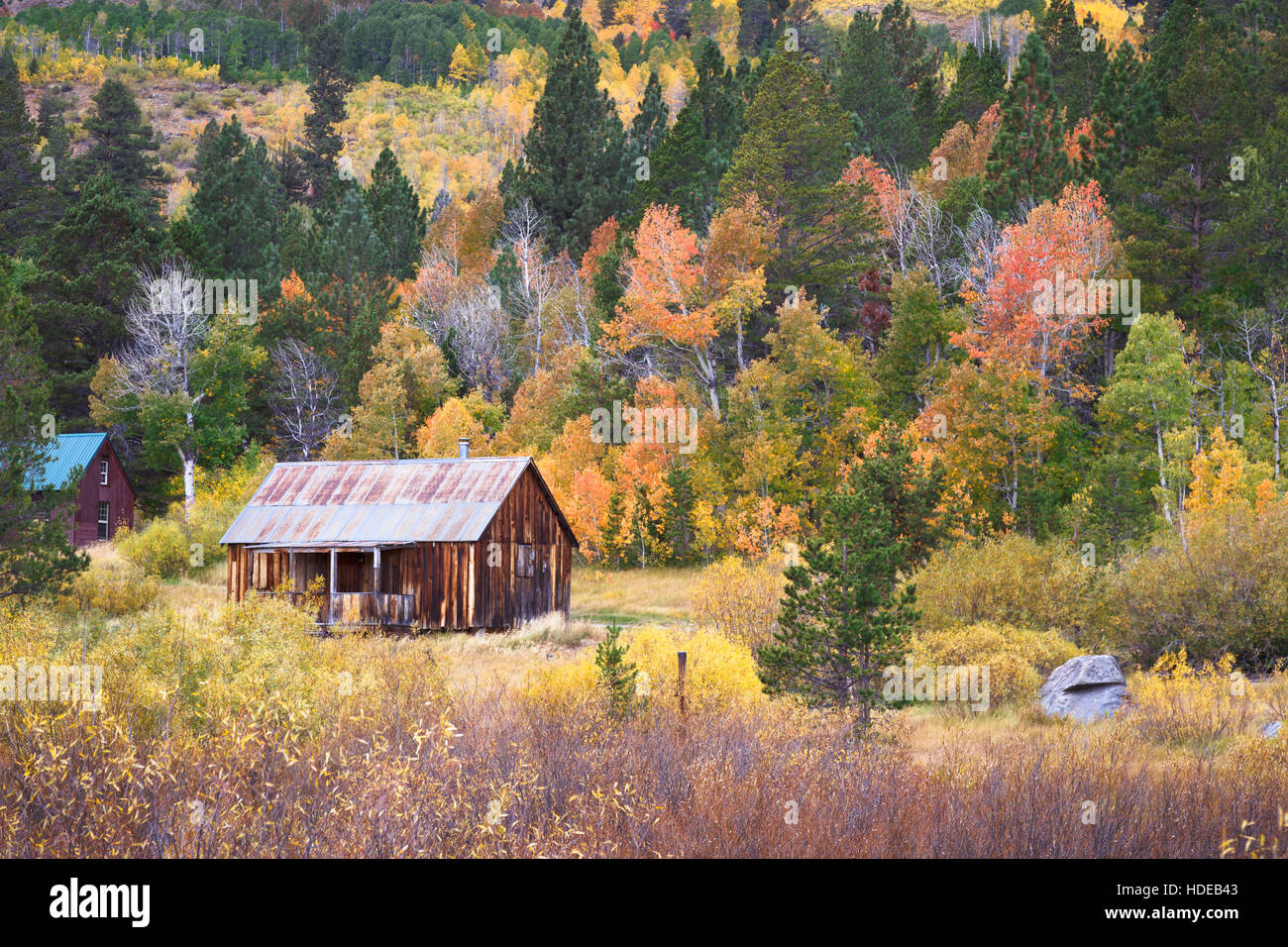 Rustic barn with fall colors in Hope Valley, California - Stock Image