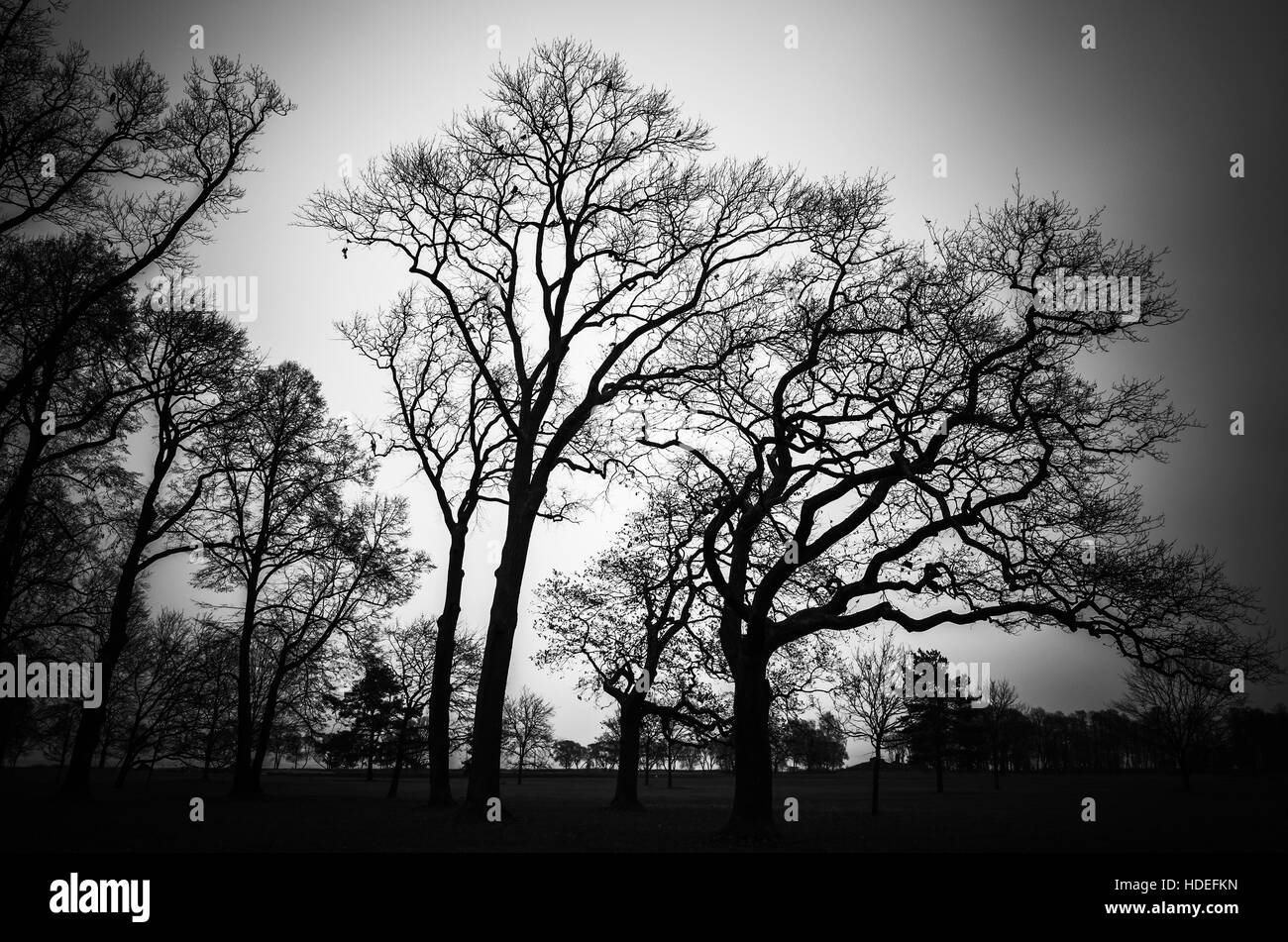 Leafless bare trees in dark forest. Stylized natural silhouette background photo - Stock Image