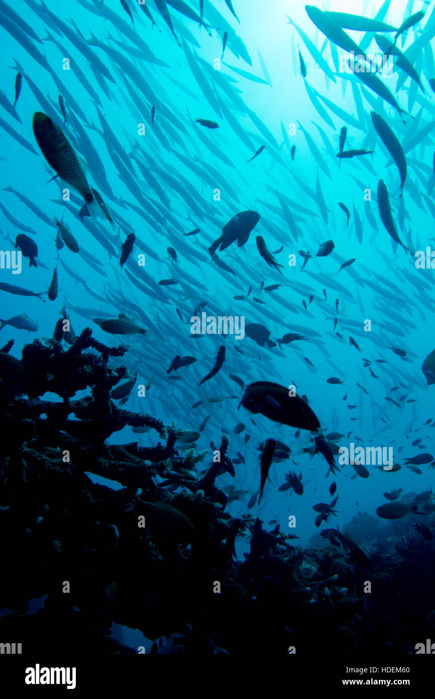 Healthy blue water reef silhouette with schools of fish backlit by the sun. - Stock Image