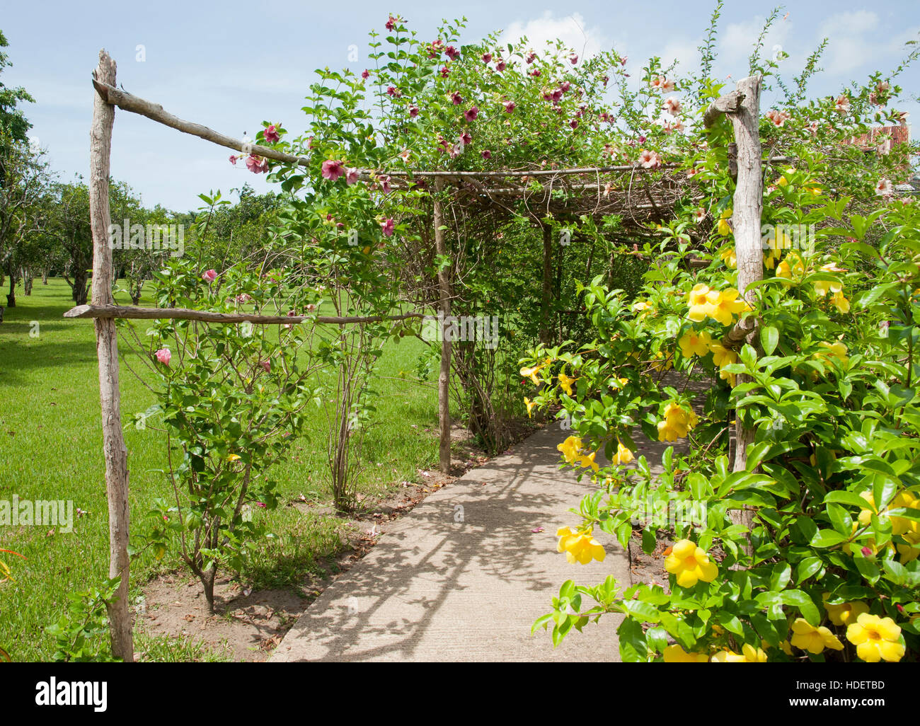 Pergola with flower in Belize City botanical garden (Belize). - Stock Image