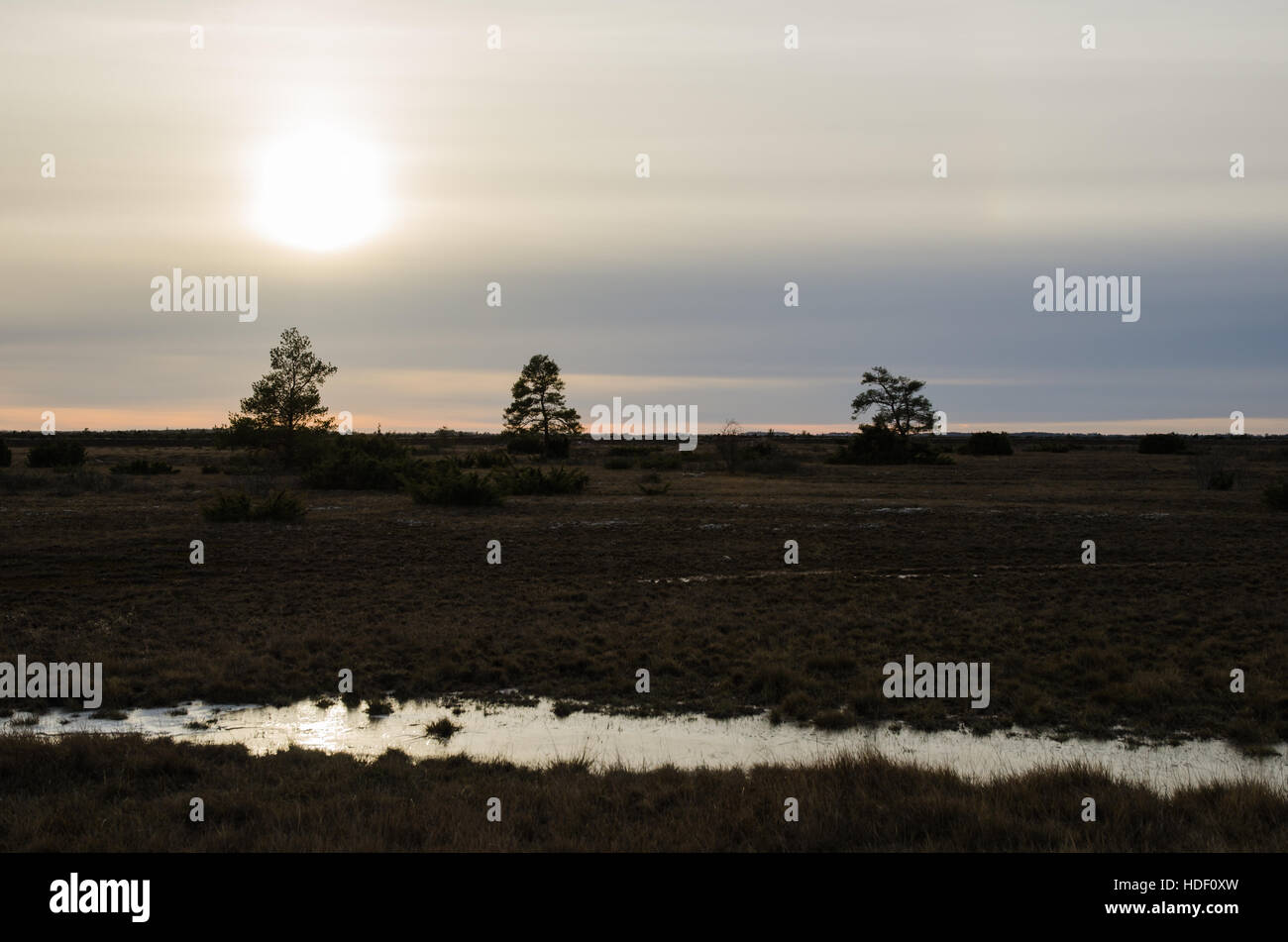 Tre silhouettes in a sullen landscape at the Great Alvar Plain at the swedish island Oland, a world heritage - Stock Image