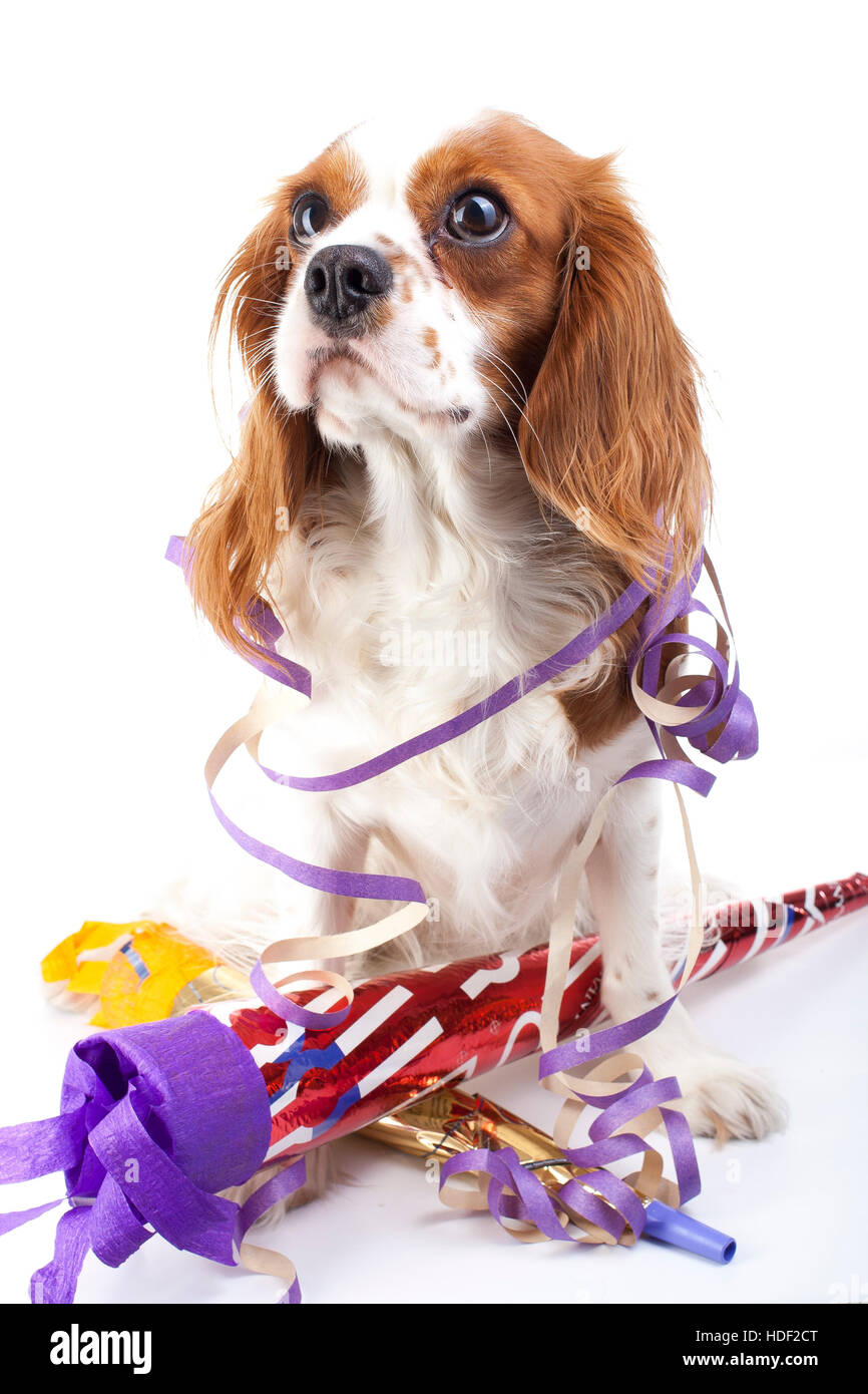 Happy new year! Illustrate your work with king charles spaniel New year illustration.  Dog celebrate New year's - Stock Image