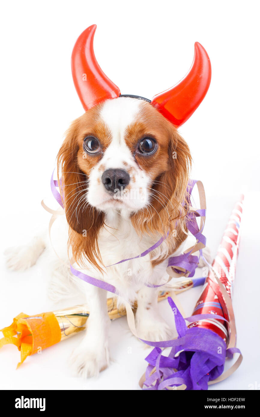 Happy new year! Illustrate your work with king charles spaniel New year illustration.  Dog celebrate New year's Stock Photo
