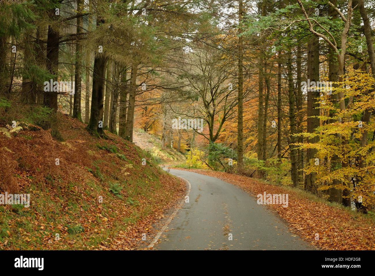 Road through a forest in autumn - Stock Image