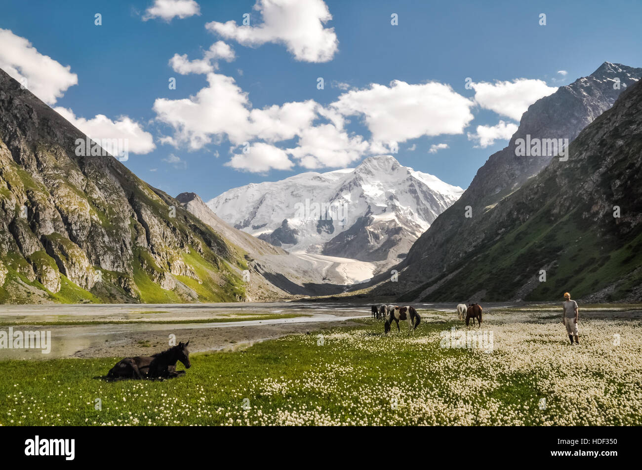 Photo of hiker standing in field near wild horses with large mountain range in distance in Karakol in Kyrgystan. - Stock Image