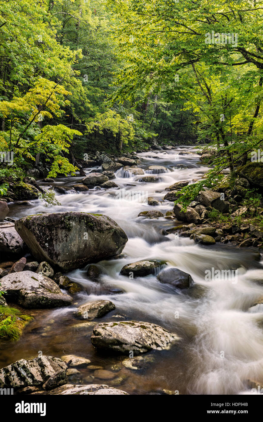 Middle Prong Little River in the Tremont area of the Great Smoky Mountains. - Stock Image