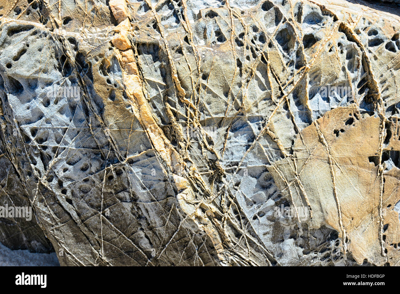 Fretworks of quartz veins etched from the sandstone, Quarry Beach, Mallacoota, Victoria, Australia It is a site - Stock Image